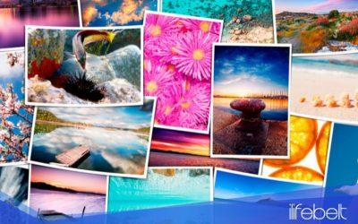 Shutterstock Editor: Una aplicación sencilla para tus diseños